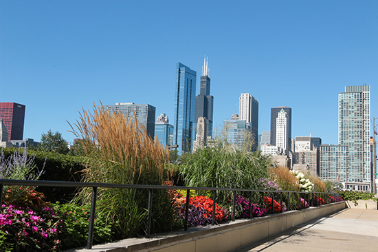 Chicago Commercial Landscape Services