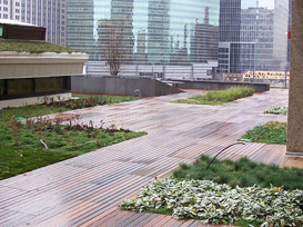Green roof design and construction